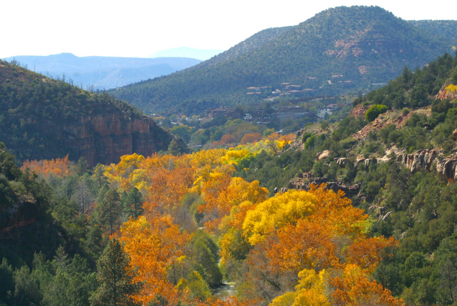 Sedona-Fall-Leaves-006