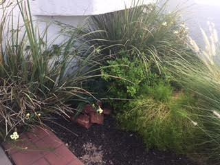 a garden 5