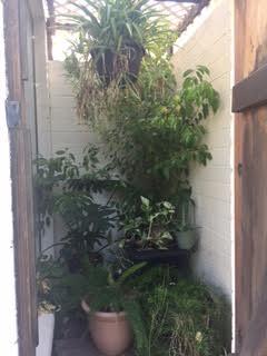 a garden 4